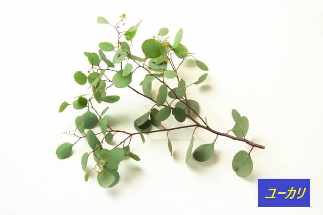 ユーカリの木から取れる育毛成分ユーカリエキス