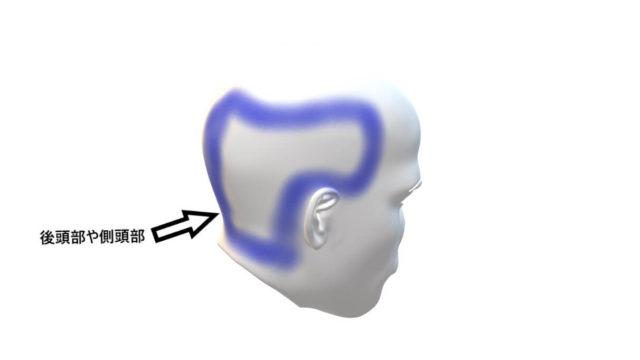 人間の後頭部と側頭部の図